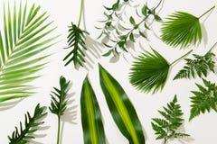 Foglie tropicali differenti su fondo bianco fotografia stock