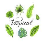 Foglie tropicali disegnate a mano messe royalty illustrazione gratis