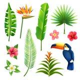 Foglie tropicali messe Immagini Stock Libere da Diritti