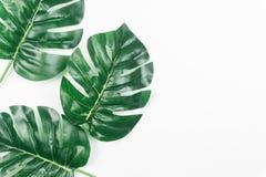 Foglie tropicali Monstera su fondo bianco Disposizione piana, vista superiore fotografie stock libere da diritti