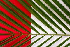 Foglie tropicali, primo piano Priorità bassa astratta variopinta Fotografia Stock