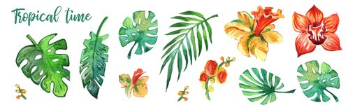 Foglie tropicali variopinte e fiori acquerelli su fondo bianco Stampe acquerelle Elementi della decorazione immagine stock libera da diritti
