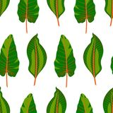 Foglie tropicali verdi senza cuciture Immagini Stock