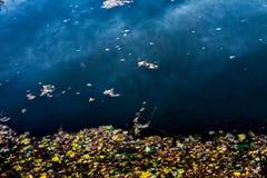 Foglie in un lago fotografie stock libere da diritti