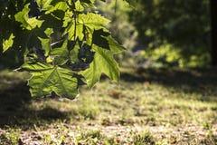 Foglie in una foresta Immagini Stock