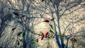 Foglie in una foresta di inverno Fotografia Stock