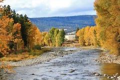 Foglie variopinte all'autunno, giardino botanico di VanDusen, Vancouver del centro, Columbia Britannica Fotografie Stock Libere da Diritti
