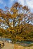 Foglie variopinte alla riva del fiume in autunno fotografia stock