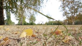 Foglie variopinte in autunno nel parco video d archivio