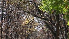 Foglie variopinte in autunno nel parco archivi video