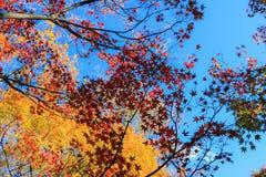 Foglie variopinte con il fondo del cielo blu Fotografie Stock