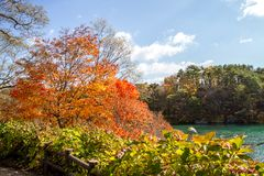 Foglie variopinte degli alberi alla riva del lago in autunno fotografie stock libere da diritti