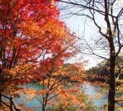 Foglie variopinte degli alberi alla riva del lago in autunno immagini stock