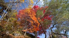 Foglie variopinte degli alberi alla riva del lago in autunno fotografia stock libera da diritti