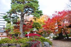 Foglie variopinte degli alberi in giardino giapponese fotografie stock libere da diritti
