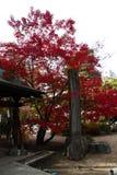 Foglie variopinte degli alberi in giardino giapponese fotografia stock libera da diritti