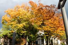 Foglie variopinte degli alberi in giardino giapponese immagine stock libera da diritti