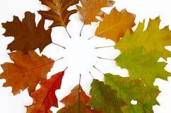 Foglie variopinte di autunno su un fondo bianco Fotografia Stock Libera da Diritti