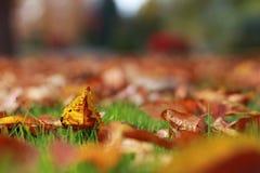 Foglie variopinte di caduta di autunno accatastate su fiero alla fine dell'erba verde di estate fotografie stock libere da diritti