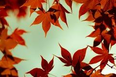 Foglie variopinte di rosso arancio fotografia stock
