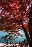 Foglie variopinte e lago variopinto in autunno immagine stock libera da diritti