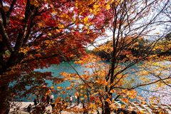 Foglie variopinte e lago variopinto in autunno fotografia stock