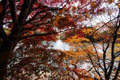 Foglie variopinte e lago variopinto in autunno fotografia stock libera da diritti