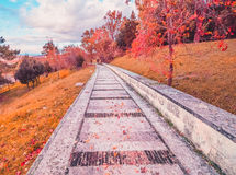 Foglie variopinte porpora gialle e rosse e colori di autunno dell'albero nel parco all'aperto con una strada Fotografia Stock