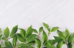 Foglie verde chiaro su fondo di legno bianco, vista superiore, spazio della copia Immagini Stock