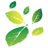 Foglie verdi amichevoli di Eco per il logo Immagine Stock