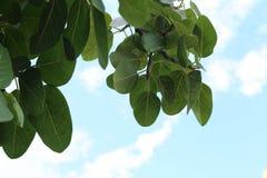 Foglie verdi astratte sul fondo blu-chiaro del cielo con copyspace Concetto della natura per il risparmio verde della terra di en Immagine Stock Libera da Diritti