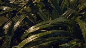 Foglie verdi brillanti ancora bagnate dalla pioggia Immagine Stock Libera da Diritti