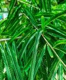 Foglie verdi che sembrano vibranti con il colpo del primo piano immagine stock libera da diritti