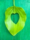 Foglie verdi con cuore fotografia stock libera da diritti