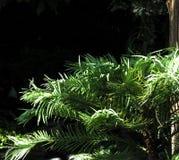 Foglie verdi con fondo nero Fotografie Stock