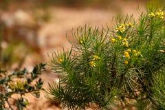 Foglie verdi con i fiori gialli Fotografie Stock Libere da Diritti