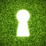 Foglie verdi con il buco della serratura Fotografia Stock