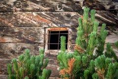 Foglie verdi con la parete di legno nei precedenti Fotografia Stock
