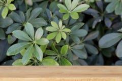 foglie verdi con la tavola di legno per esposizione il vostro prodotto Fotografie Stock