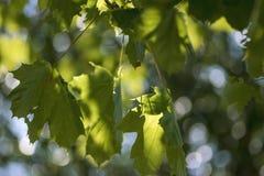 Foglie verdi con un cielo blu, fotografie stock