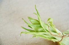 Foglie verdi del cereale legate con vecchio pizzo sulla fine semplice grigio chiaro concreta del fondo su Fotografia Stock