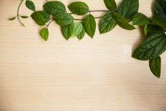Foglie verdi del fondo su legno Fotografie Stock Libere da Diritti