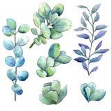 Foglie verdi del legno di bosso dell'acquerello Fogliame floreale del giardino botanico della pianta della foglia Elemento isolat illustrazione vettoriale