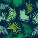 Foglie verdi del modello senza cuciture della palma Fotografia Stock Libera da Diritti