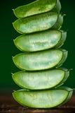 Foglie verdi del primo piano della pianta dell'aloe Fotografia Stock