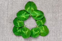 Foglie verdi del trifoglio sui precedenti del panno di tela fotografie stock