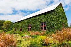 foglie verdi dell'edera sulla casa di lusso Immagini Stock