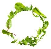 Foglie verdi dell'insalata della lattuga isolate su fondo bianco Immagine Stock