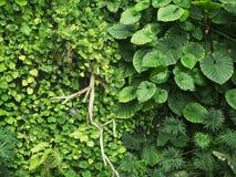 Foglie verdi della barriera in un parco Fotografia Stock
