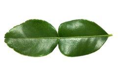Foglie verdi della calce del Kaffir su fondo bianco Fotografia Stock Libera da Diritti